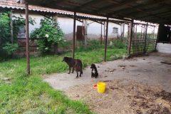 Die ersten Hunde auf dem neuen Schutzhof