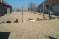 Hundeversammlung im Innenhof