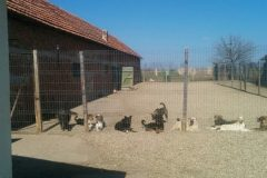Stressfreie Hunde im Innenhof