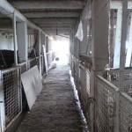 Die alten Kuhstallboxen im Gebäude