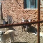 Eingänge zu den Hundeboxen