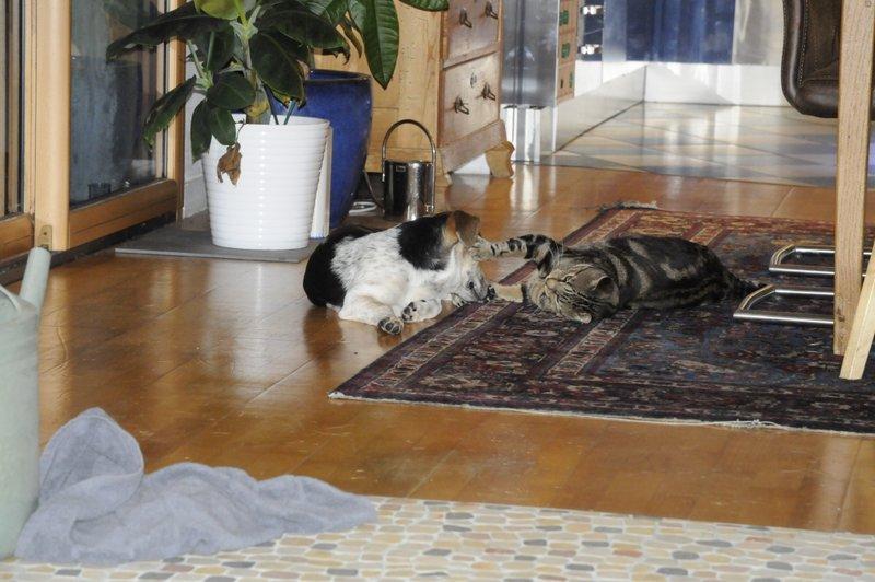 June und ihr bester Freund
