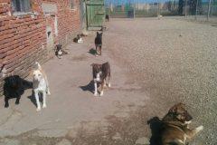 Tiere im Hof