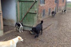 Eingang zu den Hundeboxen